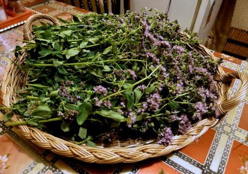 Лечебные гормональные травы для женщин